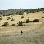 06 - Paysage typique des Causses du Larzac