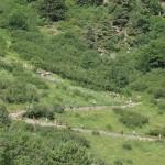 Cesni Méribel trail