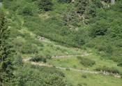 Cesni Méribel Trail : Le succès du 1er Trail Grandes Ecoles