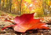 Quelques bons plans pour l'automne avec i-Run !